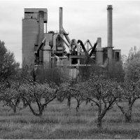 """"""" Там яблони растут..."""" :: Eino Pessi"""