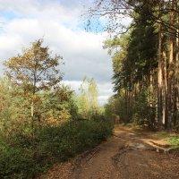 Лесными дорогами. :: Ирина Королева