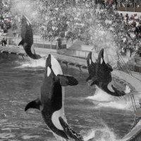 летающие французкие киты :: Елена Заичко