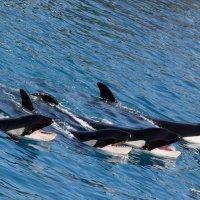 киты улыбаются :: Елена Заичко