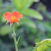 Весна :: Альбина Козина