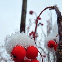 Первый снег :: Сергей Комков