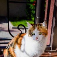 Каждая кошка внутри тигрица :: Вячеслав Ларионов
