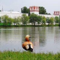Новодевичий монастырь :: Елена Ом