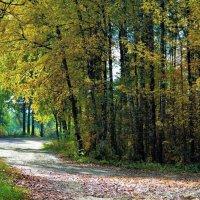 Осенний день в лесу. :: Новиков Игорь
