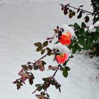 Первый снег :: Вячеслав Платонов