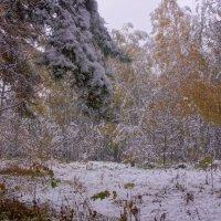 Первый снег---13 :: Владимир Холодный