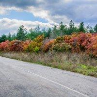 Осенняя дорога :: Юрий Шапошник