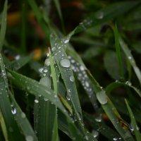 после дождя :: вген03