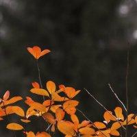 Осенний этюд :: Aнна Зарубина