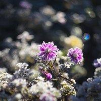 солнце и цветок :: сергей швед