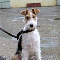 Соседский пёс. :: Светлана Сметанина