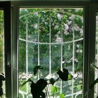 Когда за окошком расцветала весна.... :: Нина Корешкова