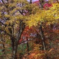Осенний пейзаж :: Евгений Поварёнков