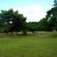 Немецкое мемориальное кладбище :: Надежда
