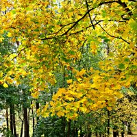 Осень золотая :: Елена Семигина