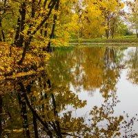 Золотой парк :: Кирилл Кошед
