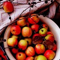 Яблоки в саду :: Галина Фуникова