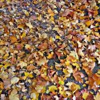 на ковре из желтых листьев... :: Людмила