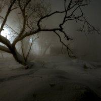 Иду на свет :: Владимир Миронов
