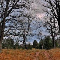 Осенняя дорога :: АЛЕКСАНДР СУВОРОВ