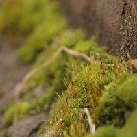 зелёный мир :: Софья Лейкина