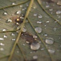 10 капель дождя :: Софья Лейкина