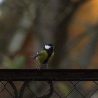 Птичка синичка :: Aнна Зарубина