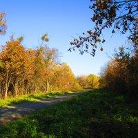 Осенний пейзаж ! :: Татьяна ❁