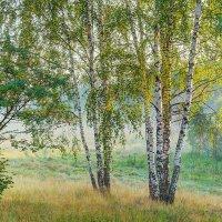 То березки, то рябины... :: Юрий Спасенников