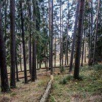 Лес- легкие нашей планеты. Берегите ЛЕС! :: Лариса *