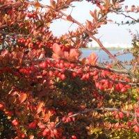 Осенний вид на Днепр :: Алекс Аро Аро