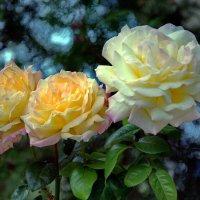 Осенние розы :: Vladimir Lisunov