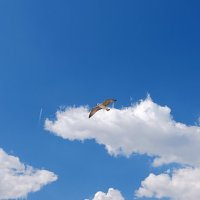Свобода в небе :: Swetlana V