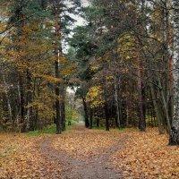 В осеннем парке :: Надежда Бахолдина