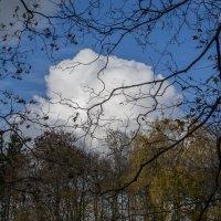 Облако. :: IRINA VERSHININA