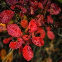 Краски осени :: Ксения ...