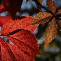 Осень :: Nerses Davtyan