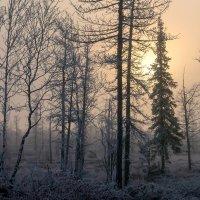 Утро над полуостровом Ямал.... :: Евгений Тараньков