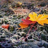 Осенние листья. :: Юрий