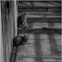 Римские коты . :: Игорь Абламейко