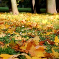 Я люблю тебя, осень, за красу небывалую ..... :: Маргарита ( Марта ) Дрожжина