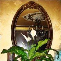 Спатифиллум в моём доме :: Нина Корешкова