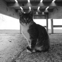 Крымский кот. :: Сергей Тупало