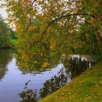 У каждого дерева своё лицо :: Nina Yudicheva