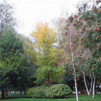 Осенние зарисовки в парке... :: Тамара (st.tamara)