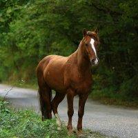 Лошадка в лесу :: valeriy khlopunov