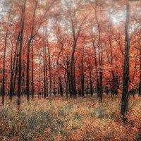 Снова Осень, закружила карусель мелодий! :: Gene Brumer