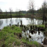 Весна на реке :: Тамара Лисицына