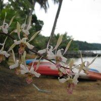 Дикая орхидея. :: Лариса (Phinikia) Двойникова
